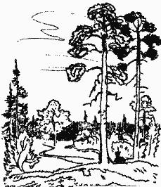 Лесной прадедушка (Рассказы о родной природе) - i_001.png