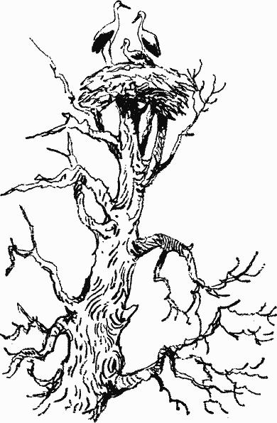 Лесной прадедушка (Рассказы о родной природе) - i_003.png