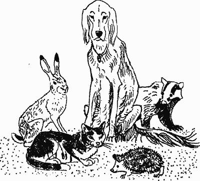 Лесной прадедушка (Рассказы о родной природе) - i_004.png