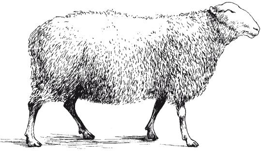 Болезни мелкого рогатого скота - i_002.png