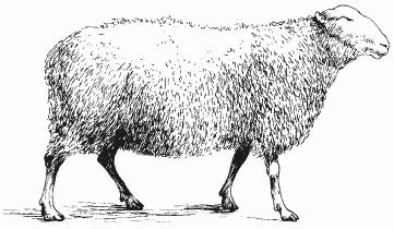 Болезни овец и коз - i_002.png