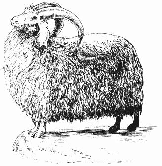 Болезни овец и коз - i_003.png