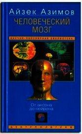 Человеческий мозг. От аксона до нейрона.