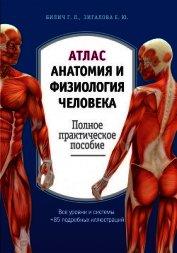 Книга Атлас: анатомия и физиология человека. Полное практическое пособие - Автор Зигалова Елена Юрьевна