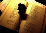 Книга Мгновения. Сборник стихов (СИ) - Автор Апанасович Вера Юрьевна
