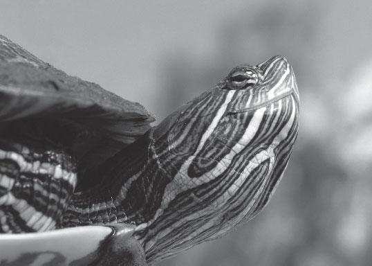 Мир животных - _4.jpg