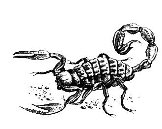 Членистоногие (Ракообразные. Паукообразные) - i_001.png