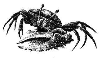 Членистоногие (Ракообразные. Паукообразные) - i_002.png