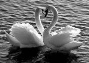 Влюбиться в стерву и сделать предложение лебедю (СИ)