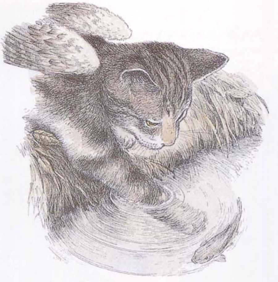 Крылатые кошки - i_012.jpg