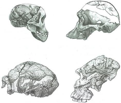 Скелеты в шкафу. Драматичная эволюция человека - i_012.jpg
