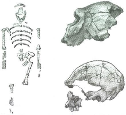 Скелеты в шкафу. Драматичная эволюция человека - i_021.jpg