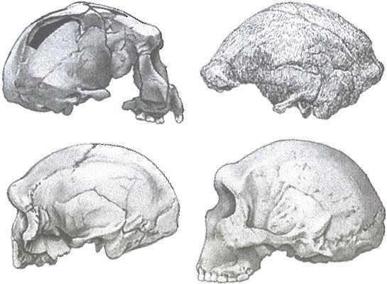 Скелеты в шкафу. Драматичная эволюция человека - i_024.jpg