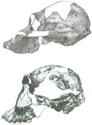 Скелеты в шкафу. Драматичная эволюция человека - i_028.jpg