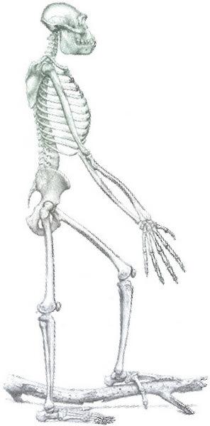 Скелеты в шкафу. Драматичная эволюция человека - i_029.jpg