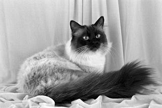 Лечение кошек - i_001.jpg