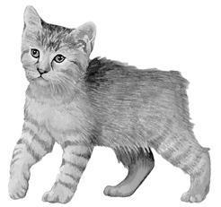 Лечение кошек - i_003.jpg