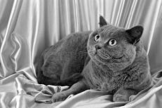Лечение кошек - i_004.jpg