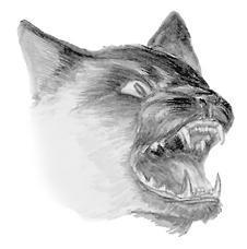 Лечение кошек - i_005.jpg