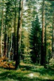 Лес – кормилец