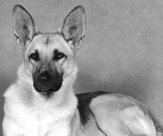 Лечение собак: Справочник ветеринара - _01.png