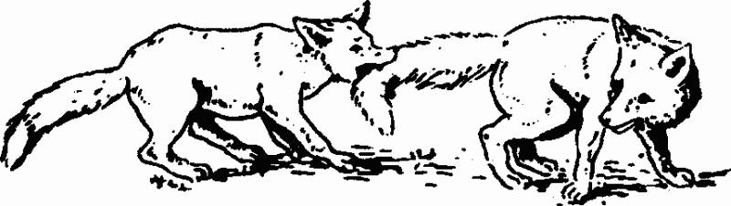 Основы зоопсихологии - i_001.png
